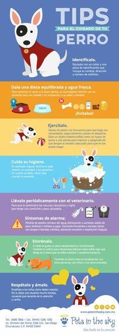 Cuida tu mascota