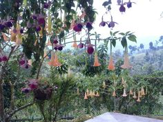 Pretty vista ~ must be a huge fuchsia!  Though how does one spell #fuschia?