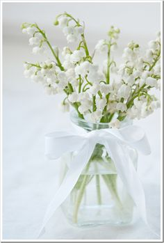 lily of the valley or... mughetto