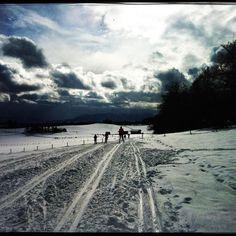 Cross country skiing at my doorstep.  #soulomotion #soultravels #outdoorgirl #adventuregirl #mindful