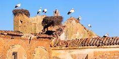 Resultado de imagen de cigueñas en Extremadura
