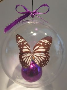 """Danaus melanippus"" from Austrailia      The Ghost Monarch  clear ornament    100mm $20.00      80mm $15.00 US Butterfly Ornaments, Clear Ornaments, Christmas Bulbs, Holiday Decor, Crafts, Manualidades, Christmas Light Bulbs, Handmade Crafts, Diy Crafts"