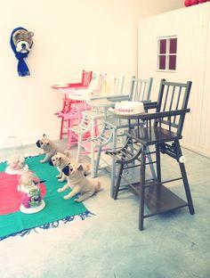 Bonton Bazar - Thème chiens
