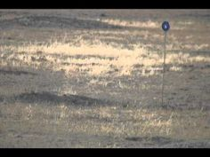Video of a young black-footed ferret  The video was taken by David Jachowski of the US Fish and Wildlife Service.