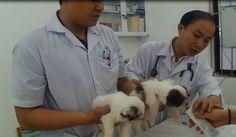 De gedreven dierenarts werkt elke dag hard om zieken dieren beter te maken en dieren op te vangen. Hij hoopt met het werk dat hij doet de mentaliteit te veranderen van de Vietnamezen. De Vietnamezen vinden dieren namelijk vaak vies, maar dit komt omdat zij zelf de dieren niet goed behandelen.