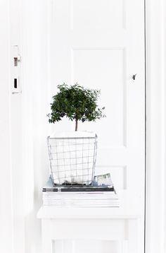 Imagen de home, interior, and plants