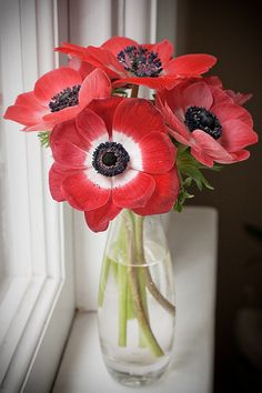 anemones | Flickr - Photo Sharing!