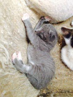 Love my kittens!