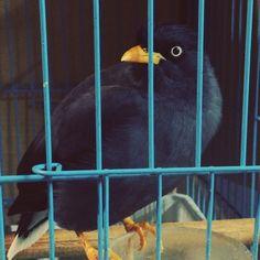 この鳴き声はなに? オリジナル?  真似? Parrot, Saints, Bird, Instagram Posts, Animals, Parrot Bird, Santos, Animales, Animaux
