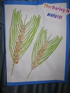 why is shavuot a dairy holiday