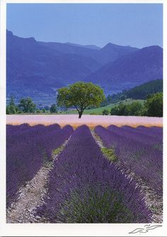 Provence, France by katya., via Flickr
