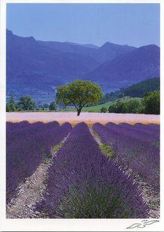 Provence, France by katya., via Flickr