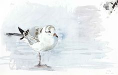 Akvarell-arkiv - Lars Jonsson Uppsala, Watercolor Bird, Watercolor Paintings, Watercolours, Illustration Sketches, Illustrations, Bird Drawings, Bird Pictures, Wildlife Art