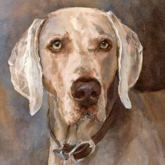 Weimaraner Print of Watercolor Dog Painting by EdieFaganArt on Etsy. Tate loves his pet portrait - what a handsome puppy!