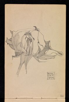 Plant Study ▫ Rose by Charles Rennie Mackintosh ▫ 1894 Charles Rennie Mackintosh, Botanical Drawings, Botanical Art, Plant Illustration, Botanical Illustration, Sketchbook Inspiration, Art Sketchbook, Graphite Art, Art Graphique