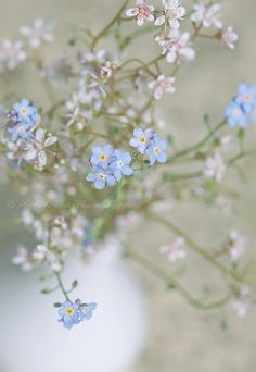 Delicate Forget me nots -- simple country arrangement in white porcelain or glazed pottery