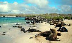 galapagos islands equador