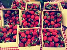 Dreaming of summer strawberries.
