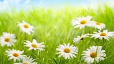 Flower Photos, Trees To Plant, Most Beautiful, Flora, Herbs, Plants, Photography, Photograph, Tree Planting