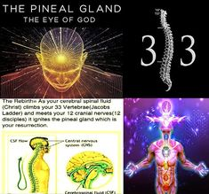 Spiritual Wisdom, Spiritual Awakening, Drunvalo Melchizedek, Mind Unleashed, Pineal Gland, Age Of Aquarius, Spirit Science, World Religions, Mind Tricks