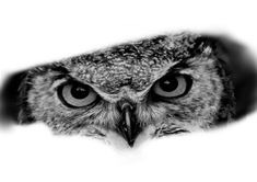 Chicano Art Tattoos, Dot Tattoos, Sleeve Tattoos, Wolf Black And White, Black And Grey Tattoos, Bad Wolf Tattoo, Owl Tattoo Back, Realistic Owl Tattoo, Owl Tattoo Drawings