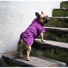 Hurtta Casual Quilted Dog Jacket | The Cheshire Horse