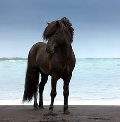 Horse on beach | Flickr - Photo Sharing!