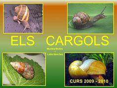 Power cargols by via Slideshare Cantaloupe, Fruit, Ethnic Recipes, Food, Snails, Animal Kingdom, Pirates, 1, Mindfulness