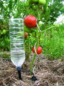 Make your own inexpensive slow drip irrigation systemeasy way to 12 diy drip irrigation system to deliver water directly to the soil this help to solutioingenieria Image collections
