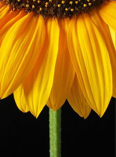 Sunflower - Wasn't sure if I wanted this with the rest of my photos or with Makes Me Smile. Sunflowers make me happy!