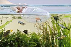 Using plastic bag to put tropical fish in tank Saltwater Aquarium Fish, Tropical Fish, Fish Tank, Swimming, Animals, Plastic, Bag, Marine Fish, Swim