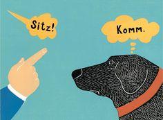 Erziehungsfehler bei der Hundeerziehung sind unausweichlich. Wir sagen Ihnen, wie Sie die häufigsten Erziehungsfehler vermeiden können. Expertentipps.