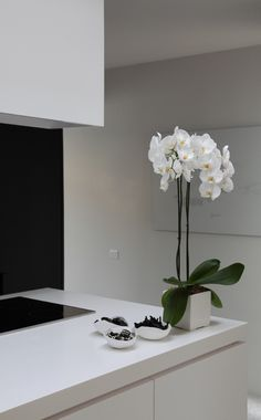 glamour for the kitchen - white Phalaenopsis  orchid in white cube