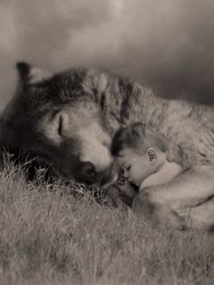 Robin Isely : Photo She was born of wolves.