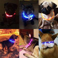 pet collar led lightOutdoor Dog Collars USB luminous USB charging Cat dog collar  http://www.calavasa.com/product/pet-collar-led-lightoutdoor/   Calavasa.com