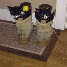 Cats Sleeping in Shoes