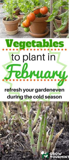 As a careful and thoughtful planner, today I'm listing out some fantastic ideas for February planting with you. #vegetable#garden#growyourmint.com