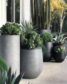 Balcony Plants, Indoor Plants, Balcony Gardening, House Plants, Outdoor Pots, Outdoor Gardens, Large Outdoor Planters, Outdoor Landscaping, Front Yard Landscaping