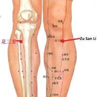 Zu San Li Acupressure Point