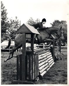 WERQ classic edition: even with the standard in the way, you can tell her equitation is perfect. Cross Country Jumps, Future Farms, Hunter Jumper, Michelangelo, Horseback Riding, Four Legged, Old School, Equestrian, Pony