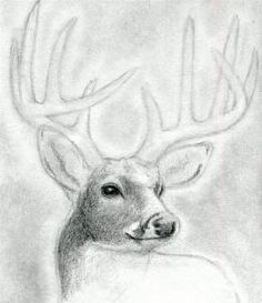 how to draw a deer head, buck, dear head step 7