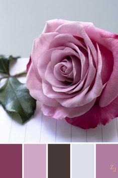 ZJ Colour Palette 429 #colourpalette #colourinspiration