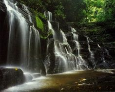 Los Katíos National Park, Provinces of Antioquia and Choco', Columbia. Inscription in 1994. Criteria: (ix)(x)