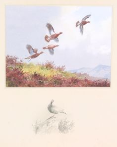 "Lot 450f, John Cyril Harrison, watercolour, signed, grouse in flight over moorland, the border with a pencil sketch of a grouse 6 3/4"" x 8 1/2"", est £260-360"