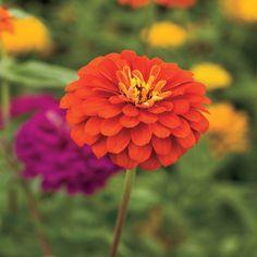 10 Plants That Beat the Summer Heat