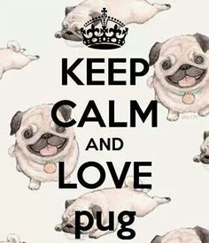 Pug.  @Stacy Stone Stone Bottone