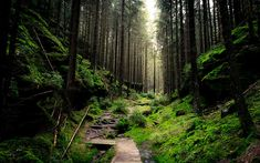 This HD wallpaper is about forest, path, deep forest, Original wallpaper dimensions is file size is Forest Wallpaper Iphone, Free Desktop Wallpaper, Computer Wallpaper, Nature Wallpaper, Forest Path, Deep Forest, Magic Forest, 4k Desktop Backgrounds, Best Nature Images