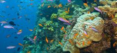 Hamilton Island: Reef