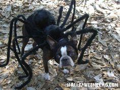 Another Halloween idea.