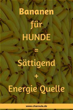 Basset Hound, Banana, Diet, Fruit, Food, Merlin, Tattoo, Animals, Faking It